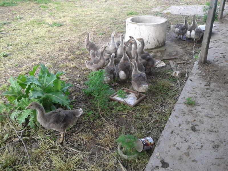 Во дворе. Пришли попить воды.