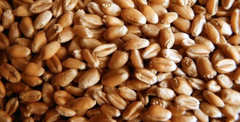 качественные корма для домашней птицы