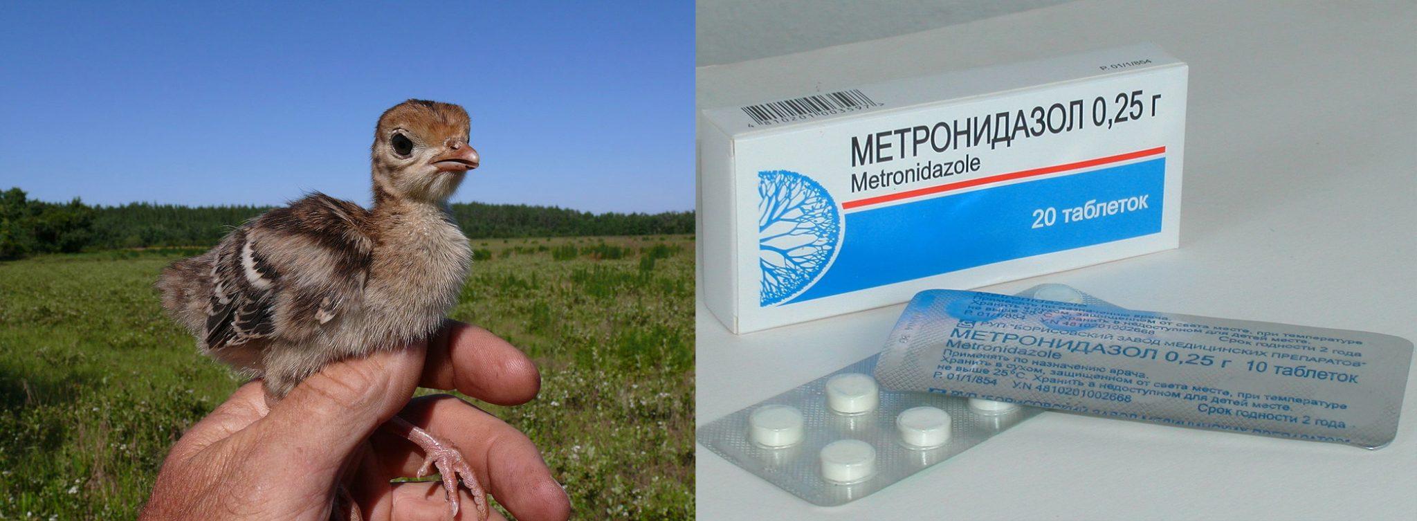 Метронидазол для индюшат инструкция по применению