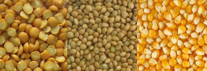 зерно для индюков