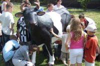 картинка как выбрать корову для семьи