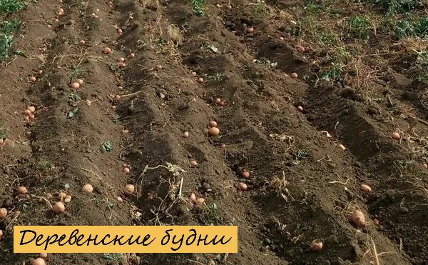 уборка урожая картошки